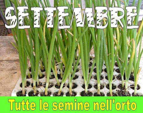utte le semine nell'orto di SETTEMBRE 2017