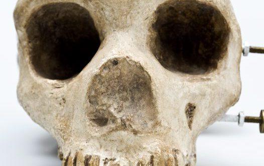 Homo neanderthalensis ci sorprende