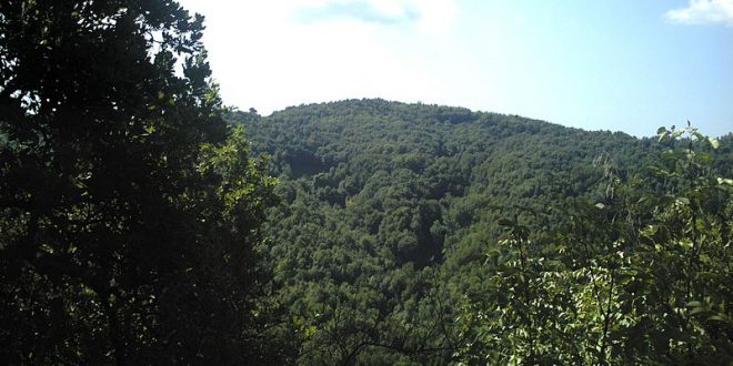 La foresta mediterranea: specie, caratteristiche, distribuzione e stato di conservazione