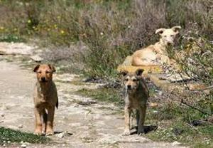 Enna: Dal bilancio niente fondi per le associazioni animaliste