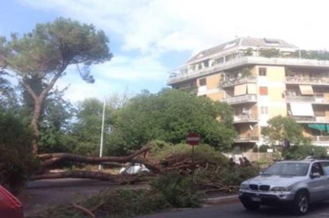 Crolla un pino sulla Cassia