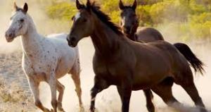 Caltagirone: Nel borgo di Santo Pietro due giorni dedicati al cavallo