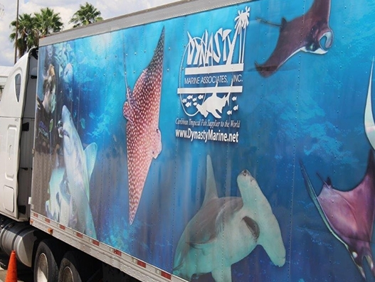 Sharks reach their new home in Brazil with the help of American Airlines Cargo | Air Cargo