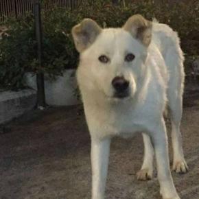 Angelo, il cane impiccato e ucciso a Sangineto, avrà giustizia