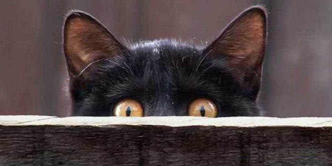L'animale più curioso al mondo: Il corvo imperiale