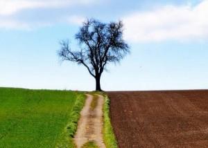 Impariamo il valore della resilienza e come assimilarlo nella nostra vita