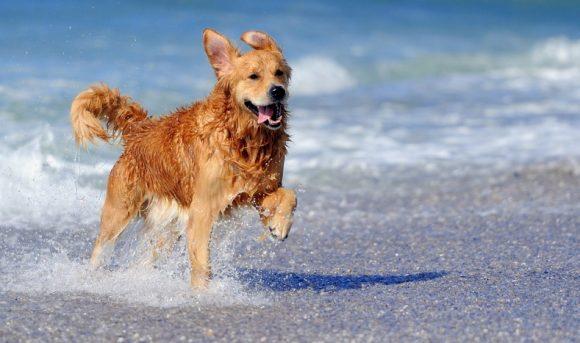 Spiagge per i cani? Ecco i lidi attrezzati in SICILIA