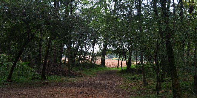 Boschi italiani: le foreste di pianura del nord Italia