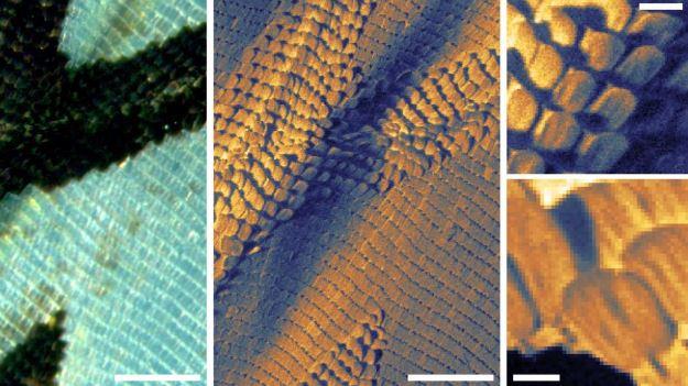 Progettato il primo microscopio a scansione di elio permetterà lo studio di campioni umani senza...