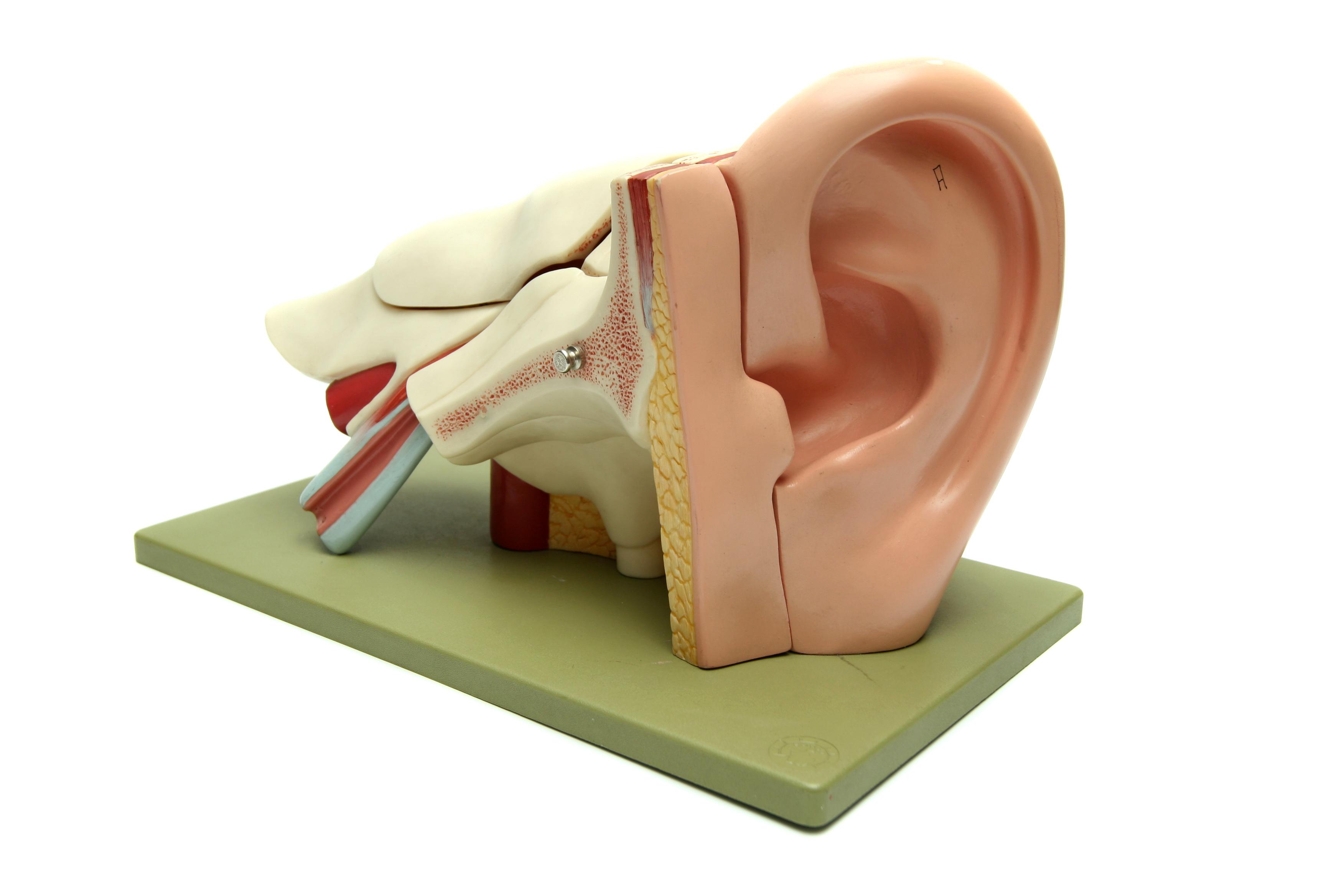 Audioprotesista, non basta la parola