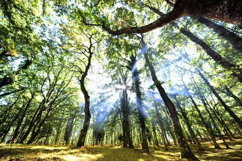 Le Faggete del Parco del Gargano diventano Patrimonio Naturale dell'Umanità