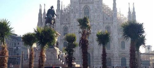 Leonforte come Milano, tornano le palme nelle Piazze