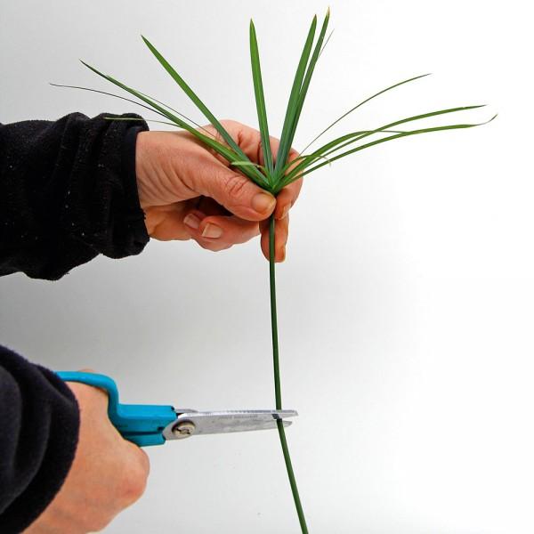 Talee per moltiplicare le piante