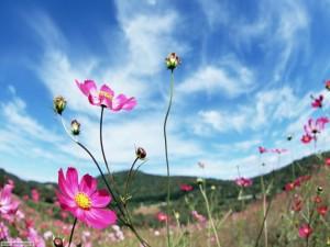 Il colore della primavera è…