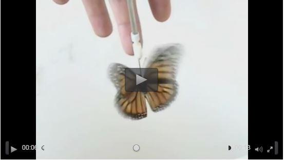 Farfalla monarca in un simulatore di volo per testare la sua bussola magnetica (video)