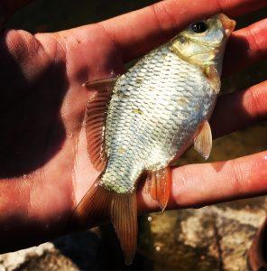 La pesca al colpo sul Lago di Annone: panorama appagante, facile da raggiungere, tante catture e divertimento assicurato!