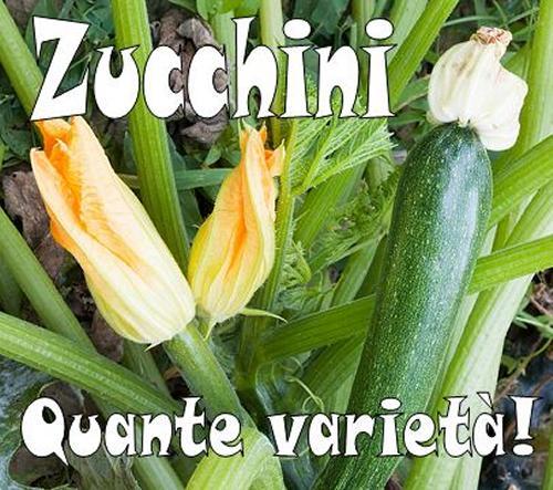 Quante varietà di zucchine!