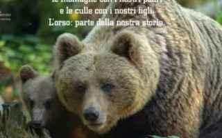Il piano sconvolgente della regione Trentino per la gestione dei lupi
