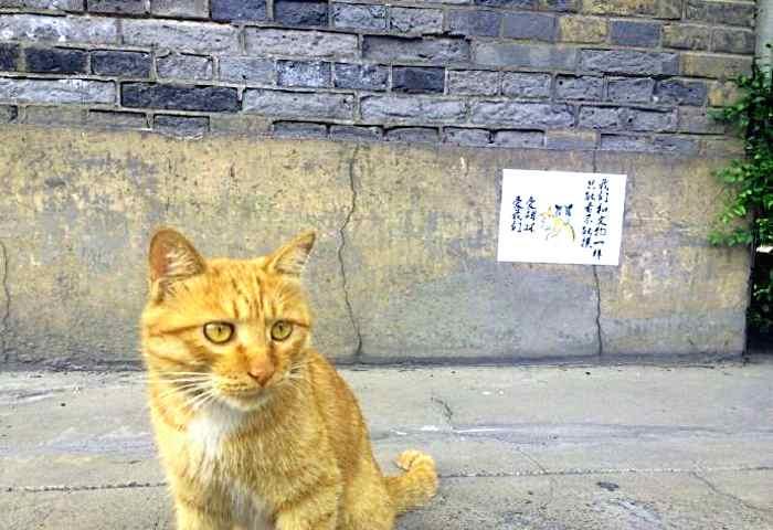 I gatti possono rimanere al museo dopo le proteste in rete