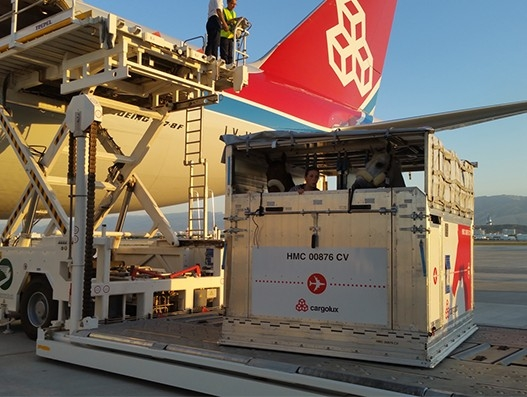 Cargolux in horse transportation to Ashgabat for Asian Games | Air Cargo
