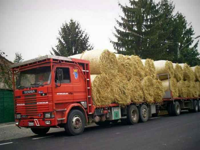 Iniziativa di Bioparco e Assessorato alla Sostenibilità Ambientale di Roma in favore degli allevatori di Accumoli